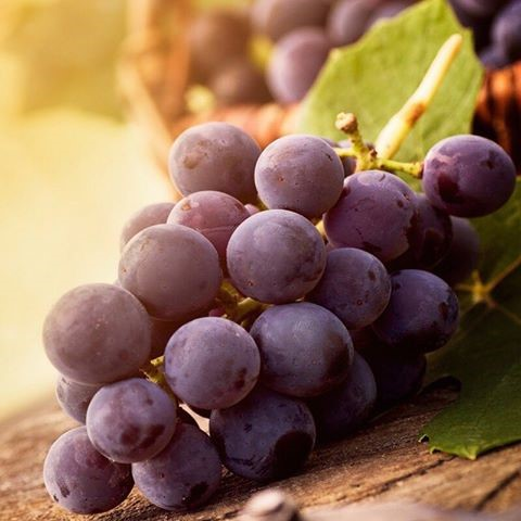 Phyto Grape Extract